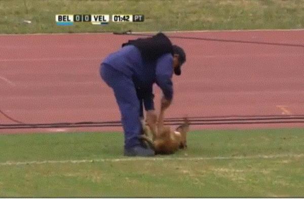 بالفيديو: كلب يضفي مسحة فكاهة على مباراة بالدوري الأرجنتيني